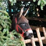 2014-12-07 Weihnachtsmarkt Auswahl 3 14